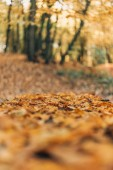 Photo Selective focus of fallen golden leaves in forest
