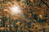 Selektivní fokus větve stromů s slunečního světla v lese