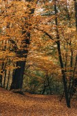 Autumn forest with yellow leaves on tree twigs