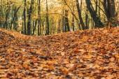 Fotografie Selektiven Fokus der herbstlichen Wald mit abgefallenen Blättern