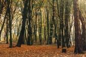 Žluté listí v podzimním lese se stromy