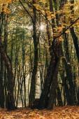 Slunce skrze větve stromů na podzim park