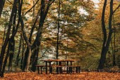 Wooden benches and table in peaceful autumn forest