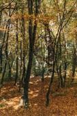 Fotografie Zlaté listí poblíž stromů v lese