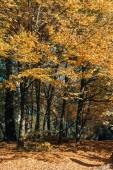 Slunce prosvítající větvičky stromu v lese zlaté