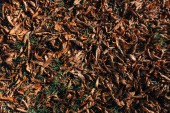 Fotografie Close up of dry brown leaves on ground