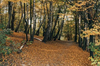 Fallen leaves on pathway in autumn forest stock vector