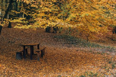 Wooden benches and table in autumn park
