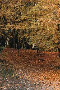Fallen yellow leaves in autumn park stock vector