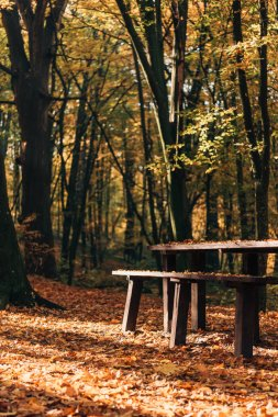 Sunshine on fallen leaves near wooden benches and table in forest
