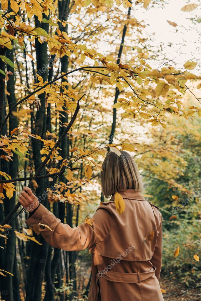 Back view of woman walking in autumn forest and touching tree branch