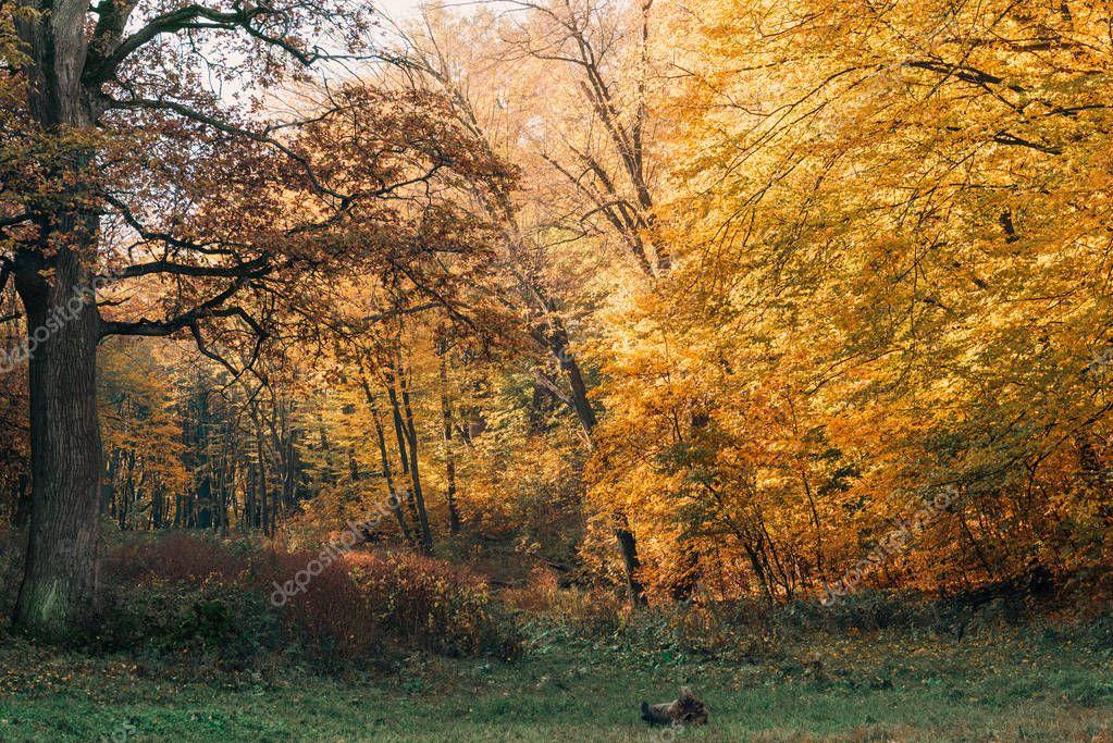 Фотообои Beautiful landscape of peaceful forest in autumn