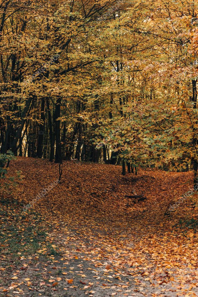 Fallen yellow leaves in autumn park