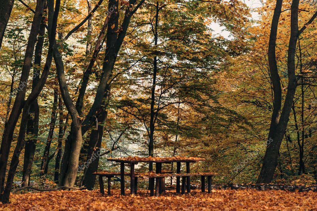 Фотообои Wooden benches and table in peaceful autumn forest