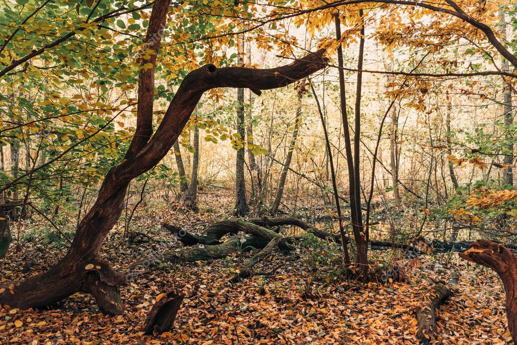 Fallen leaves near tree roots in autumn forest