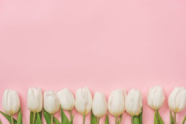 White tulips arranged in row on pink background with copy space stock vector
