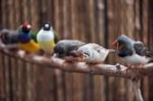 válogató összpontosít-ból ravasz és színdús Egzotikus madarak-ra fa ág