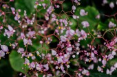 close up view of small purple flowers on branches