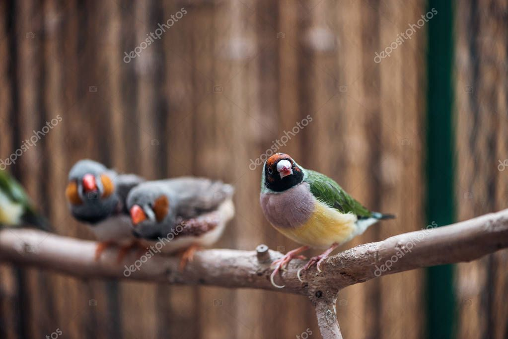 Selective focus of colorful cute birds on wooden branch stock vector