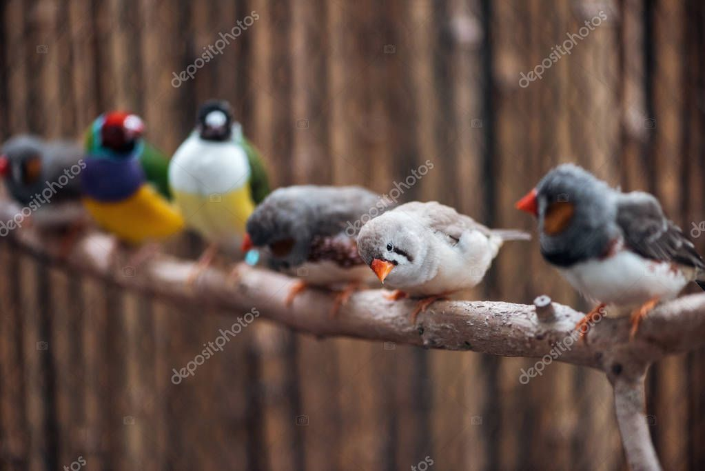 Selective focus of cute and colorful exotic birds on wooden branch stock vector
