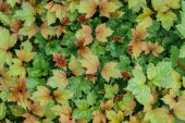 red, yellow and green autumnal leaves, seamless background