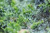 selektivní zaměření kapek vody na povrch v blízkosti zelených rostlin
