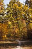 Fotografie malebný podzimní les se zlatým listím a stezkou na slunci