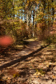 Fotografie scenic autumnal forest with golden foliage and path in sunshine
