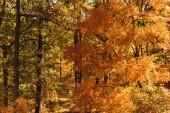 malebný podzimní les se zlatým listím na slunci