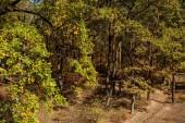 malebný podzimní les a stezka na slunci