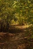 Fotografie picturesque autumnal forest with golden foliage and path in sunlight
