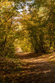 Photo scenic autumnal forest with golden foliage and path in sunlight