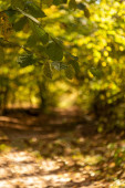 Fotografie selective focus of scenic autumnal forest with golden foliage and path in sunlight