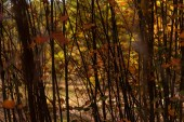 Fotografie tree branches with golden foliage in autumnal forest