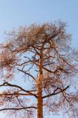 Blick auf den herbstlichen Baumstamm auf blauem Himmel