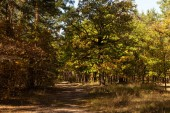 scenic autumnal forest with golden foliage and path in sunlight