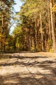 malebný podzimní les se zlatým listím a stezkou na slunci
