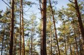 festői őszi erdő fa fatörzsek a napfényben