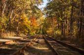 železnice v malebném podzimním lese se zlatým listím na slunci