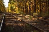 železnice v podzimním lese se zlatým listím na slunci
