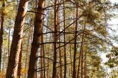 nízký úhel pohledu na dřevěné kmeny na slunci