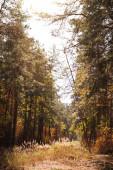 malebný podzimní les se zlatým listím a slunečním světlem