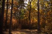 malebný podzimní les se stromy na slunci