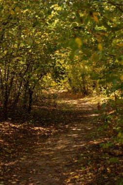"""Картина, постер, плакат, фотообои """"живописный осенний лес с золотой листвой и дорожкой в солнечном свете постеры картины модульные"""", артикул 315758184"""