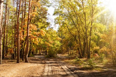 scenic autumnal forest with golden foliage, path and shining sun