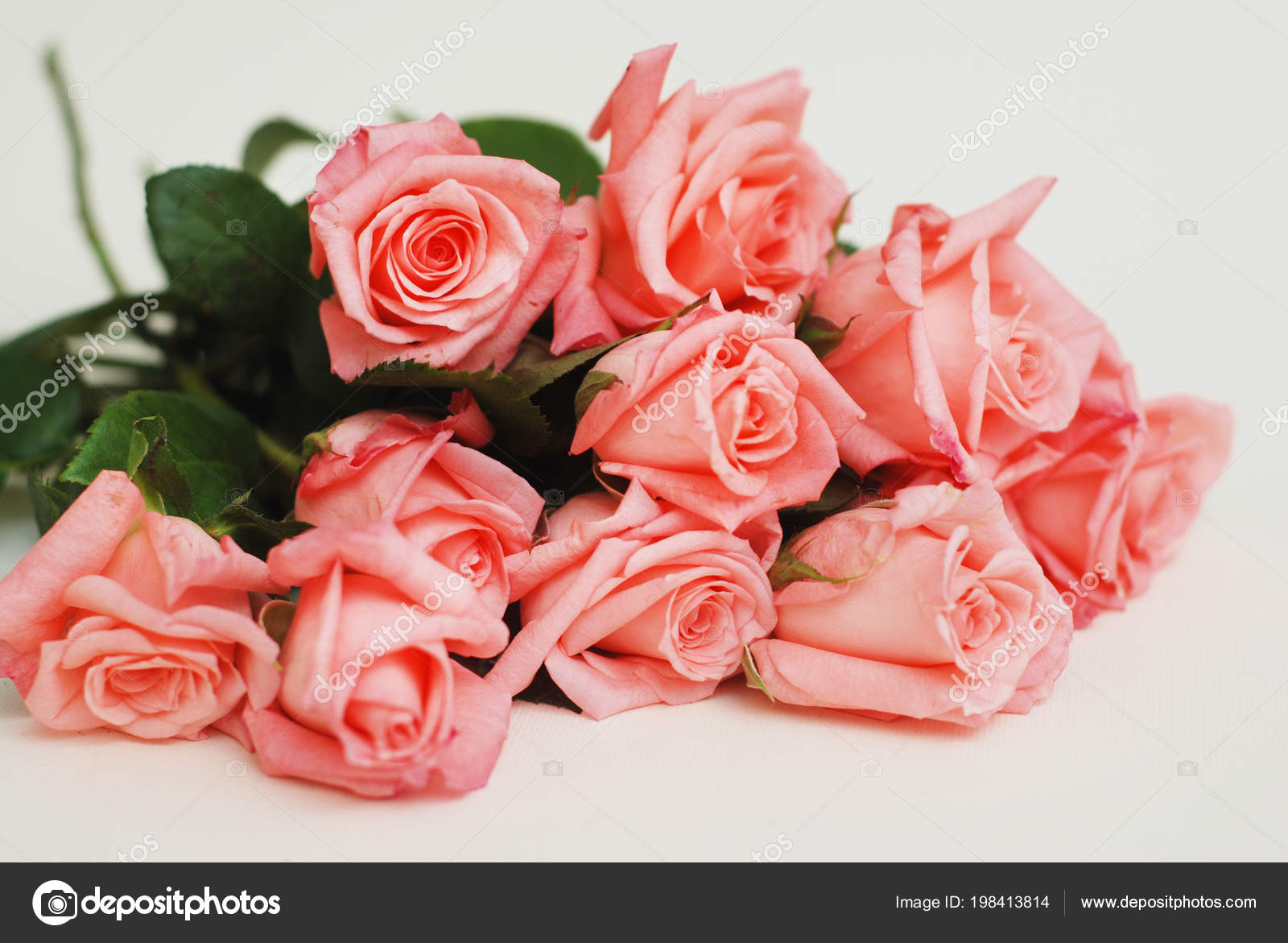 Coral Pink Rose Flower Isolated Flower Bouquet Bunch White