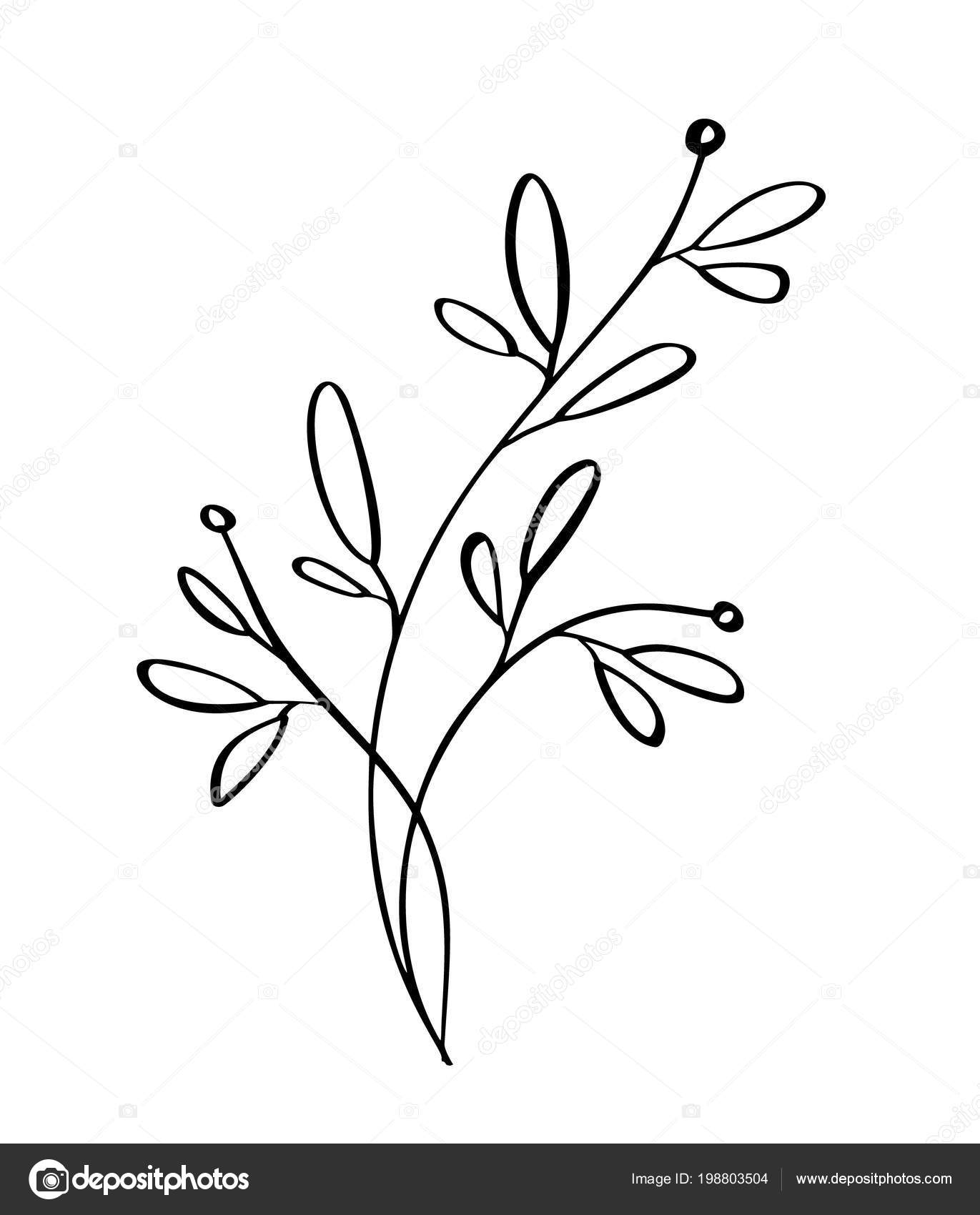 Moderni Kvetiny Rucne Kreslene Kresleni A Skica Kvetinove S