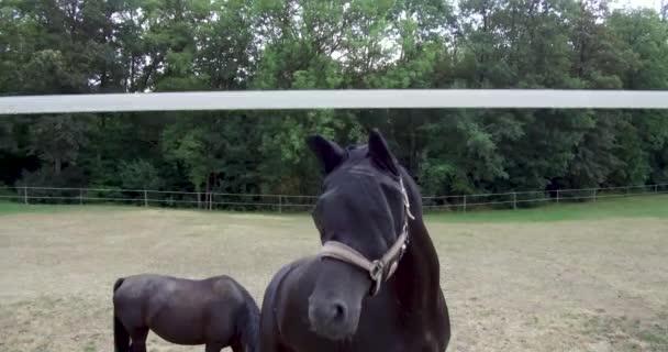 Wandern auf dem Bauernhof Tiere Leben Land der Tierwelt schwarze Pferde Rennen oder ihren Lebensraum