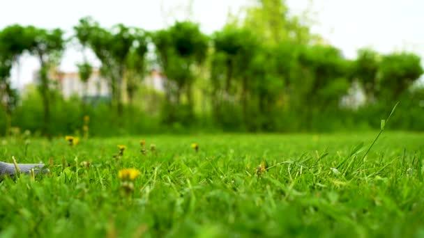 Die Schritte im Gras sind groß, der Hintergrund verschwommen. Großaufnahme eines Mannes, der im Frühling in Turnschuhen und Jeans auf hellgrünem Gras läuft. Zeitlupe.