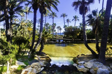 Landscape on a lake with a wooden bridge and palm trees in the park of El Palmeral on a sunny day in the city of Alicante, Spain.